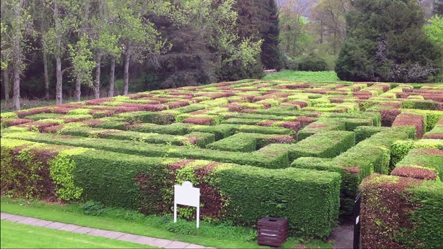 The Dissertation Maze